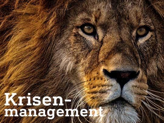 Krisenmanagement Infraprotect löwe klein